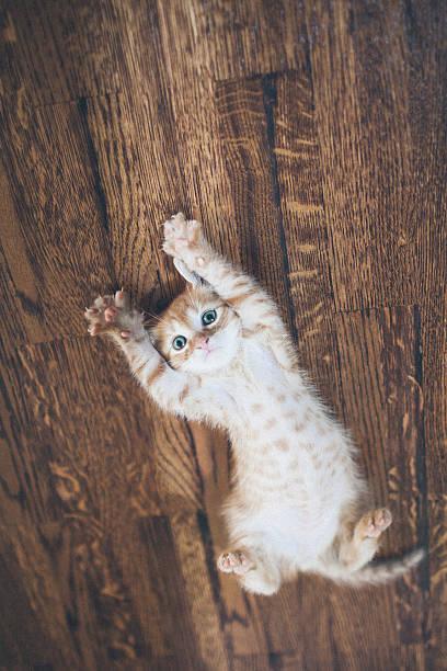 Cat picture id499572886?b=1&k=6&m=499572886&s=612x612&w=0&h=7vskavzgrbuw32i wuh6esjt9gnnygc07ee nh se3k=