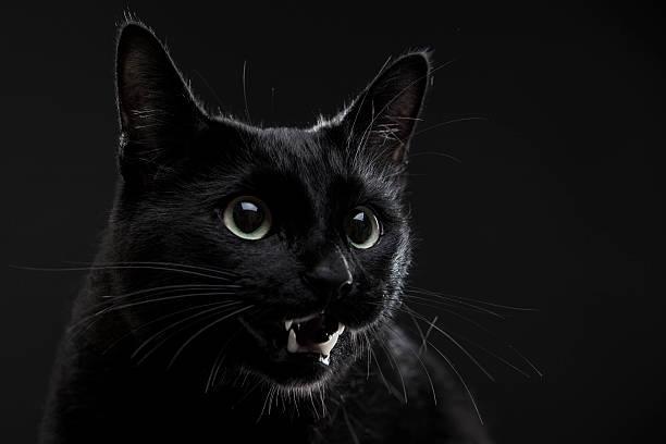 Cat picture id503562938?b=1&k=6&m=503562938&s=612x612&w=0&h=46em4dyweecisjm zqst6t3lk3x7rmt4ixhz07pkuiq=