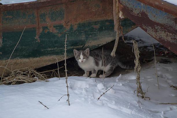 Cat picture id503812576?b=1&k=6&m=503812576&s=612x612&w=0&h=xvmcqu1kdp3ip5mr5ge1plvh9throufkbfkq4vodzhg=