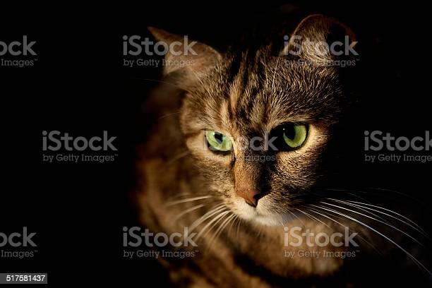 Cat picture id517581437?b=1&k=6&m=517581437&s=612x612&h=5y5mlegat0auwrq5rw9cw4tnrtcnmvtsytsta4ea9ss=