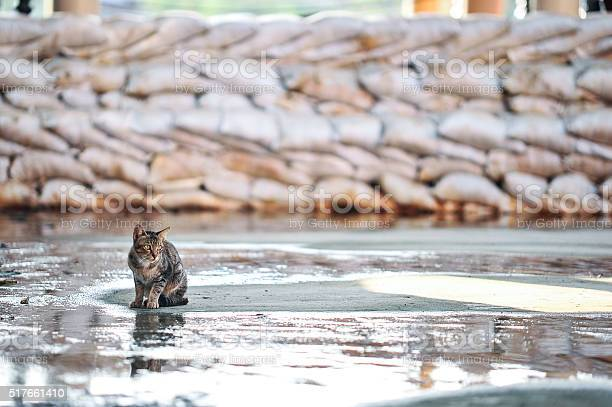 Cat picture id517661410?b=1&k=6&m=517661410&s=612x612&h=abuvmqandmqjyazaumi1ogjlufhojqe4ncwwlp2djow=