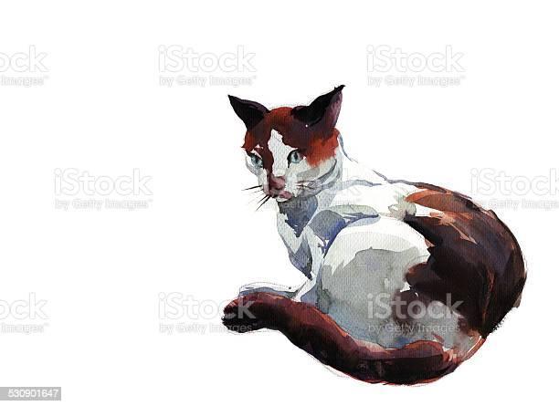 Cat picture id530901647?b=1&k=6&m=530901647&s=612x612&h=p0mo7ytgndhafhnlk08ipmex7wlk0 susxv3sw3jqt4=