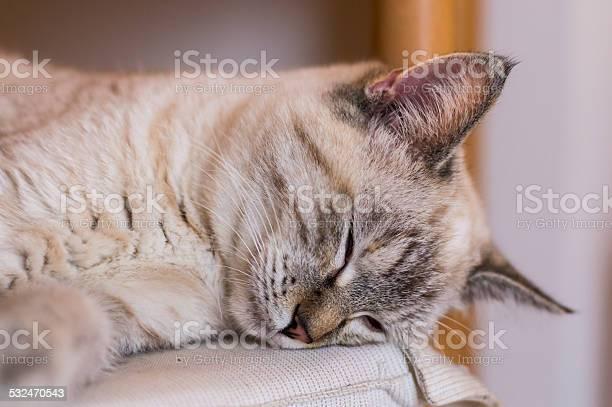 Cat picture id532470543?b=1&k=6&m=532470543&s=612x612&h=izec af1hxxt0taaijvosze jadznty rpqvieeqjxk=