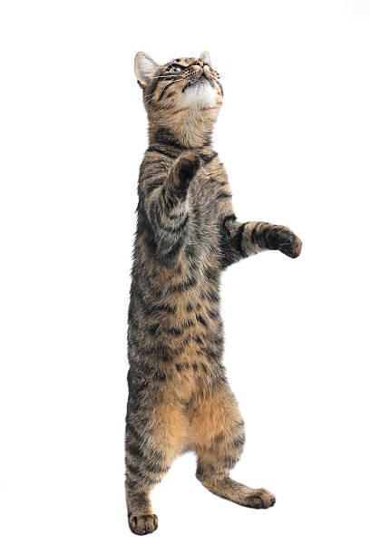 Cat picture id535450123?b=1&k=6&m=535450123&s=612x612&w=0&h=hx w6wpazc52tudownfzrt 2dhlzpr549hl1n3xfvv8=