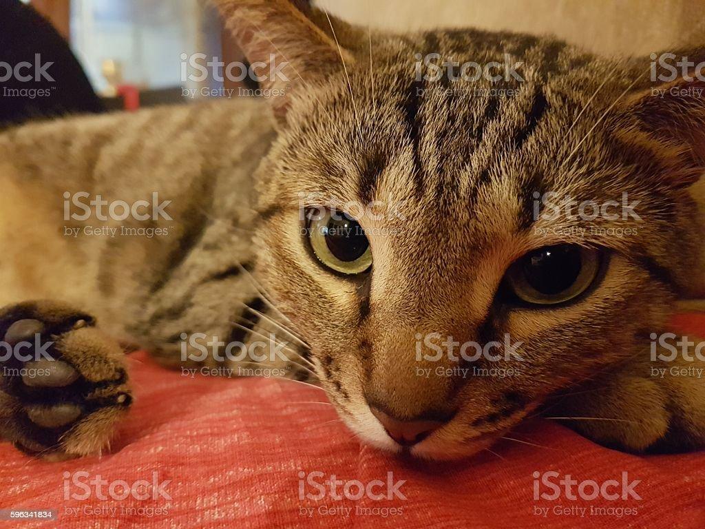 Cat  Lizenzfreies stock-foto