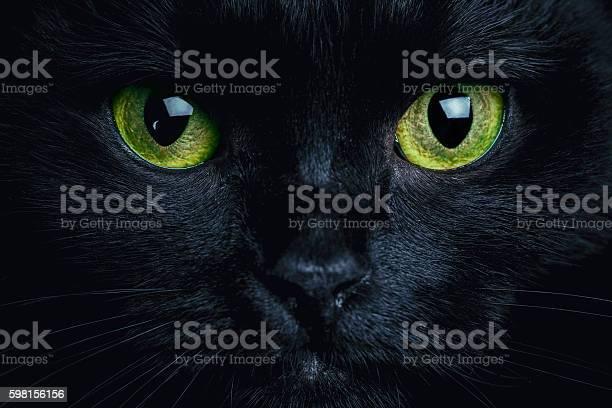 Cat picture id598156156?b=1&k=6&m=598156156&s=612x612&h=3bkoz2rh9hjgof3rj j9ykc rch7utxig4r8apog3co=