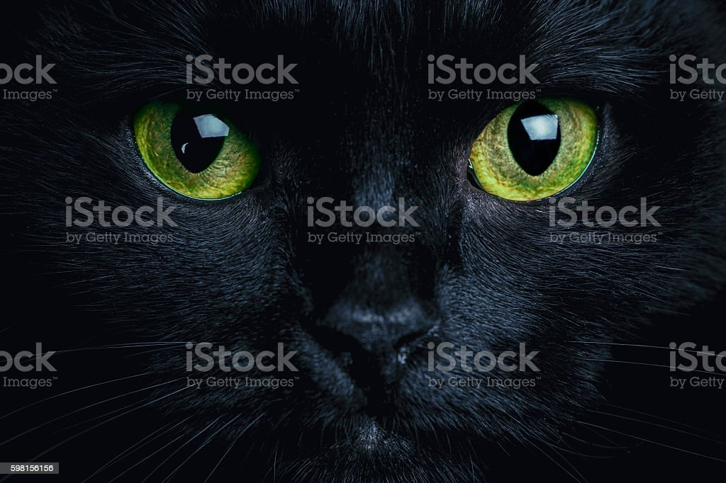 Cat stock photo