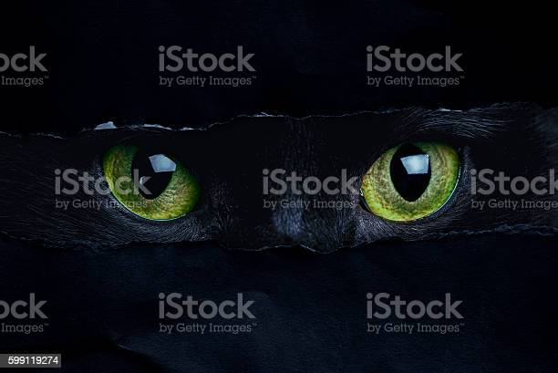 Cat picture id599119274?b=1&k=6&m=599119274&s=612x612&h=0mqlcxzgkdjrbci2tznvfqqwoa5fsy di5etcf7 rxu=