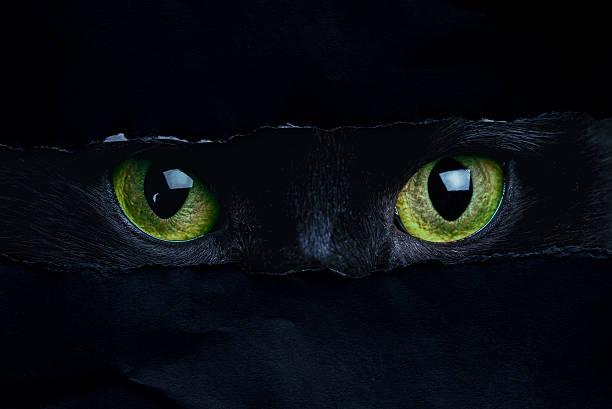 Cat picture id599119274?b=1&k=6&m=599119274&s=612x612&w=0&h=kpkbidt5joowxljgdtrbdzrw9cuydl 0yiimqmr4d00=