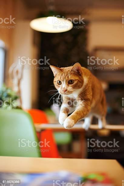 Cat picture id614626386?b=1&k=6&m=614626386&s=612x612&h=w9z hwkxhpvko3lfv8 cpye11ogfuz93a8v082jrh6g=