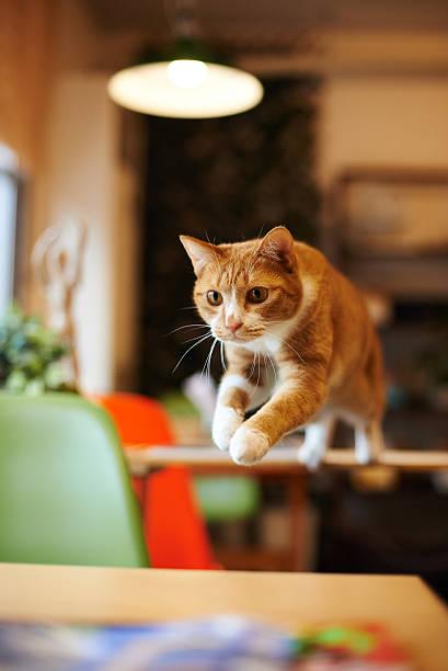 Cat picture id614626386?b=1&k=6&m=614626386&s=612x612&w=0&h=wfwmvmpm3iibcnzmhuy3b4eahyzwj9mpulrvx5hbzoo=