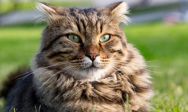Cat  – zdjęcie