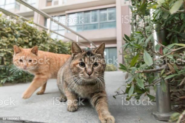 Cat picture id641869952?b=1&k=6&m=641869952&s=612x612&h= xefkvevehu3jl8n6yn2wmyyrnd2hrv3eqsy2g28qvq=