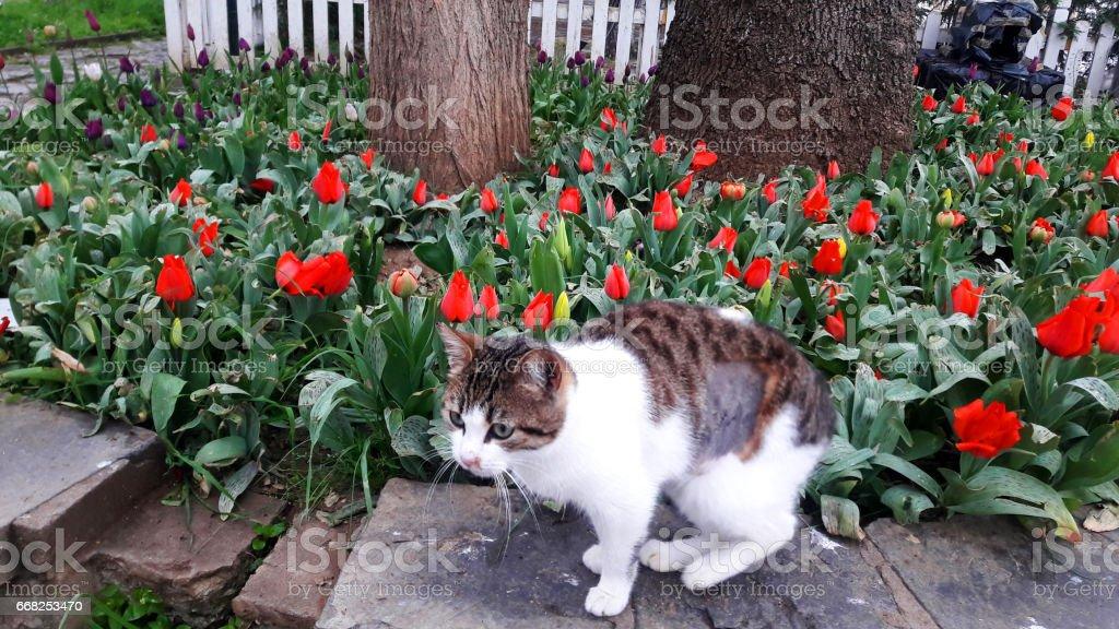 cat foto stock royalty-free