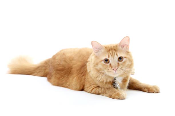 Cat picture id670802978?b=1&k=6&m=670802978&s=612x612&w=0&h=9ezziccwcjno9dumo6nif qwqqho7uxvquv cnqbs64=
