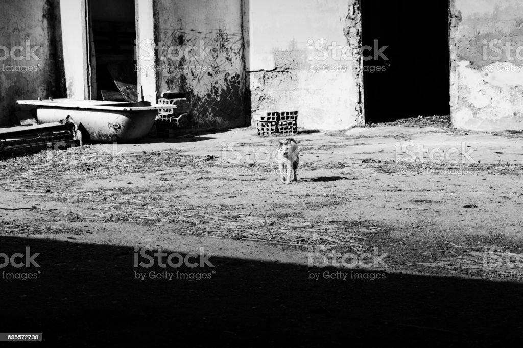 貓 免版稅 stock photo
