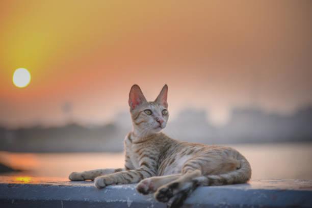 Cat picture id686689962?b=1&k=6&m=686689962&s=612x612&w=0&h=nwsdwpc70uxm5wotmcb6fswtjageb37a2umv48pz0bu=