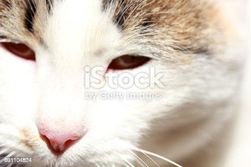 543560840 istock photo Cat 691104824