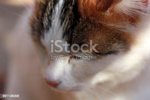 543560840 istock photo Cat 691108058