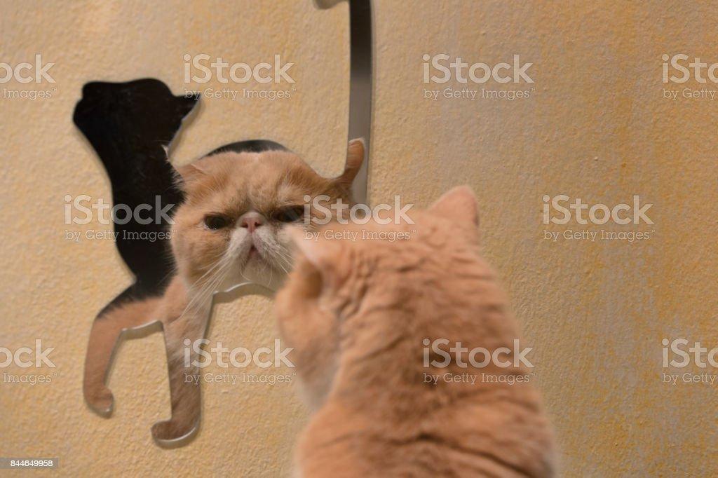 Gato - foto de acervo