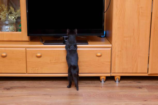 Cat picture id853125082?b=1&k=6&m=853125082&s=612x612&w=0&h=i08s61 fs0ptlzd rcsuxldaaqtjv8nkcvgneypohl0=