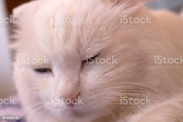 Cat picture id870053132?b=1&k=6&m=870053132&s=612x612&h=gpp6d4tb8jndvhboxbktrhh4q987euzdodwp8syggrc=