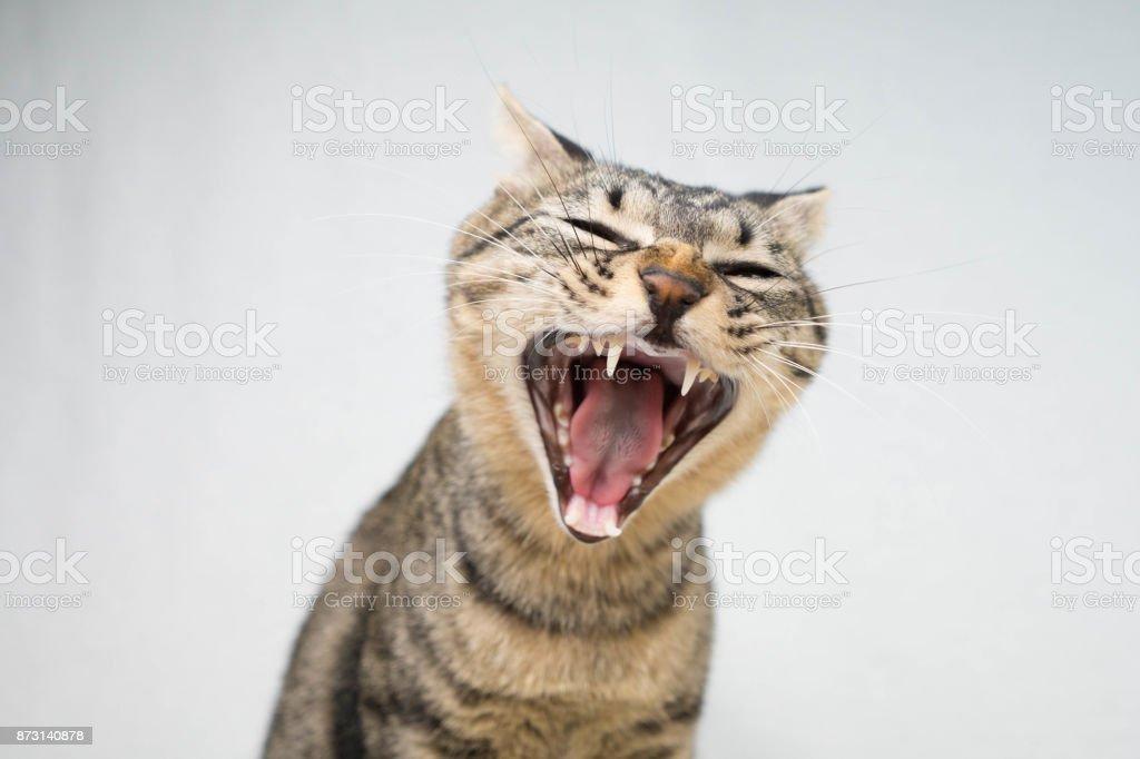 Cat - foto de stock