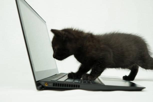Cat picture id880038406?b=1&k=6&m=880038406&s=612x612&w=0&h=982e u3kbivl7tszbiwly5qb lrszzr6apd9s0vkwbq=