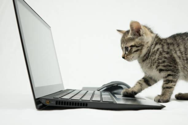 Cat picture id880038416?b=1&k=6&m=880038416&s=612x612&w=0&h=onmhn2neyjqawqiuwwbtlhanj07aee3yu8qlt90 mt8=