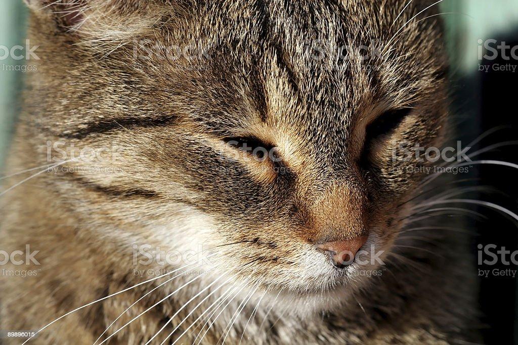 Кошка Стоковые фото Стоковая фотография