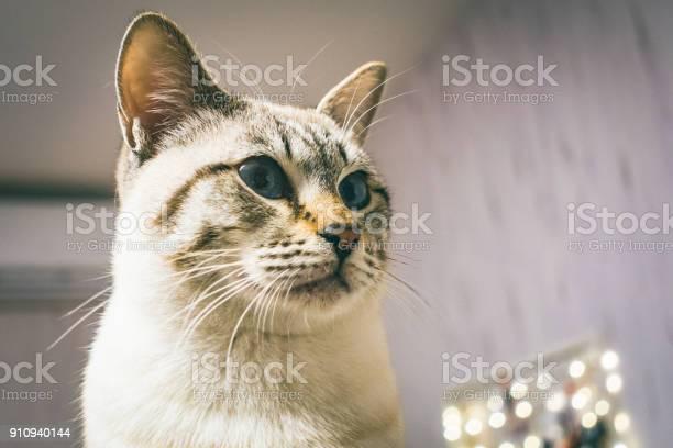 Cat picture id910940144?b=1&k=6&m=910940144&s=612x612&h=gl th5ojlmykaonavup19me6gqglwhd3ga4d5gjq1ea=