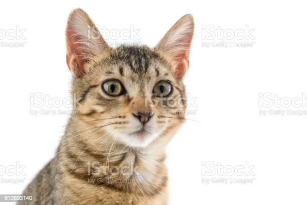 Cat picture id912693140?b=1&k=6&m=912693140&s=612x612&h=v6z 93whbi08gegoogjwfegjynsezaci39k 7gr0cxm=