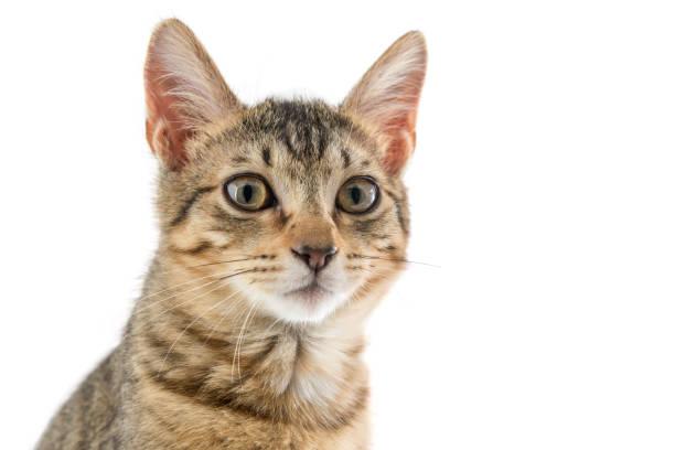 Cat picture id912693140?b=1&k=6&m=912693140&s=612x612&w=0&h=le70evb5 iwbgblbu6swjgd0mrpoi9jlyvimkai xk0=