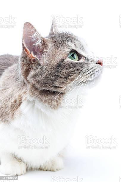 Cat picture id92208863?b=1&k=6&m=92208863&s=612x612&h=cdjciuejhaunpssx jtutcmdkkxnthz v51uee7pzk8=