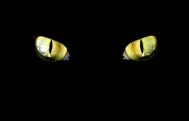 Cat picture id94077443?b=1&k=6&m=94077443&s=612x612&w=0&h=pxmmbe8flymhdqgw8ufyeoals4id7jvsgpkzgsxdam0=