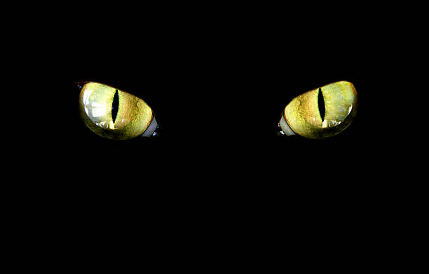 cat  animal eye stock pictures, royalty-free photos & images