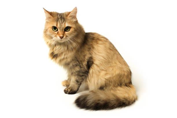 Cat picture id958308960?b=1&k=6&m=958308960&s=612x612&w=0&h=7rd2fhp7d0pf9f0khbt90jneo3te qmxmrmreas8w7y=