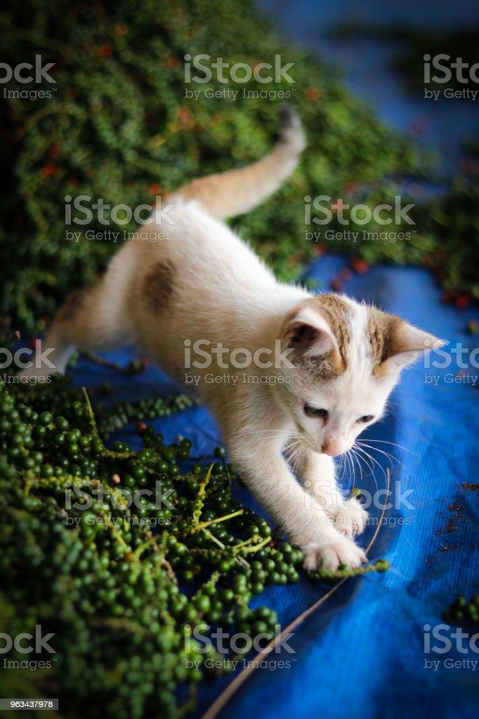 Katt - Royaltyfri Arkivfilm Bildbanksbilder