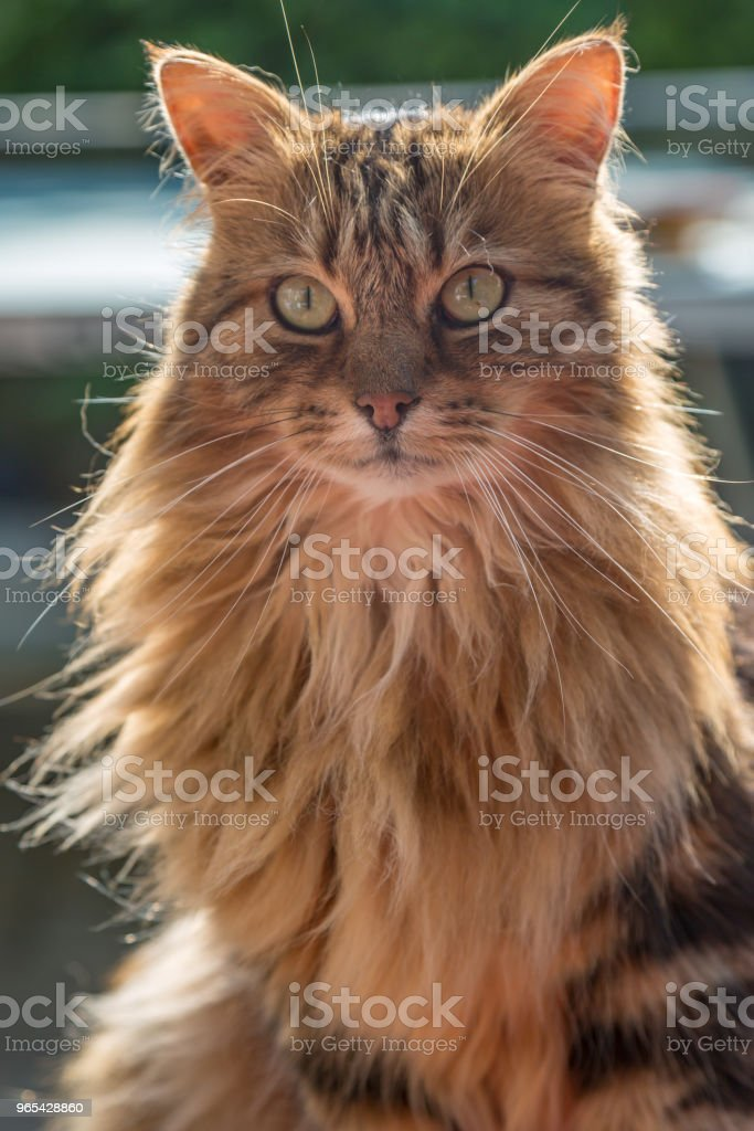 A Cat zbiór zdjęć royalty-free