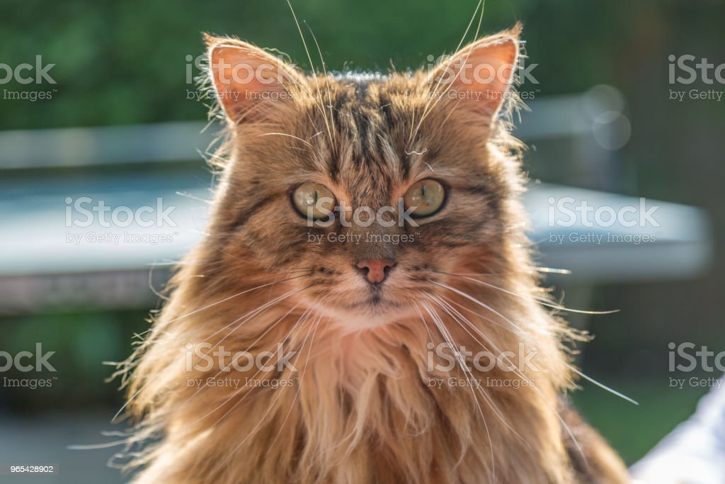 一隻貓 - 免版稅一隻動物圖庫照片