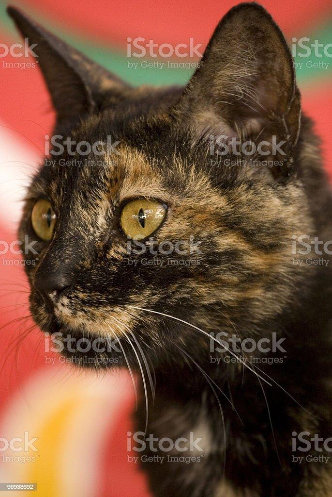 Cat royalty-free stock photo