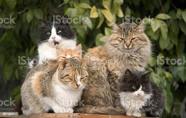 Cat pile picture id93165653?b=1&k=6&m=93165653&s=612x612&h=6eufncg8qpxydjjxngdfwcj z0cicuhitabsfsgieso=