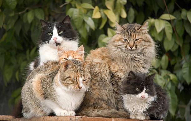 Cat Pile stock photo