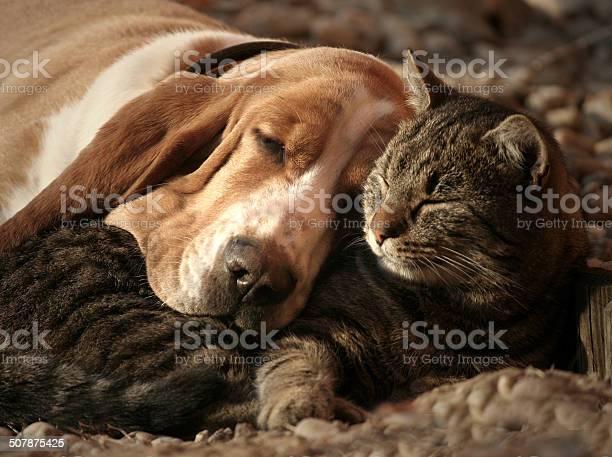 Cat pillow dog blanket picture id507875425?b=1&k=6&m=507875425&s=612x612&h=c8mrop90b b1awjcixul3x2ifba7rsiueew3t3t1rh4=