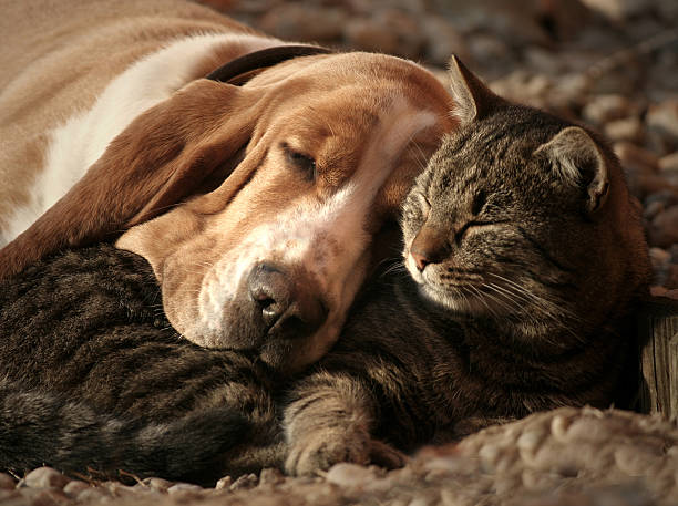 Cat pillow dog blanket picture id507875425?b=1&k=6&m=507875425&s=612x612&w=0&h=uksp8cjvqzokwayr2y4jg53zx6obljwm7xhqdppusca=