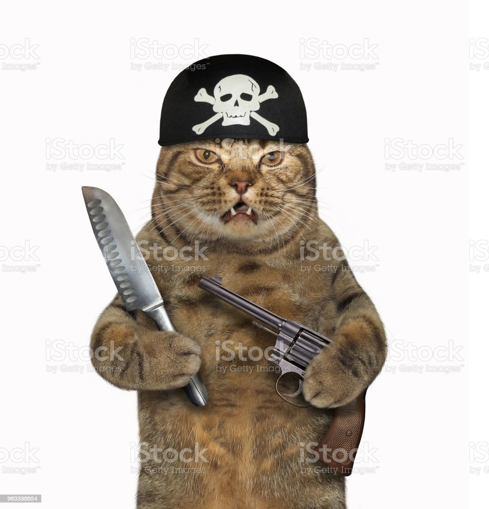 Cat pirate with a gun and a knife - Zbiór zdjęć royalty-free (Bandana)