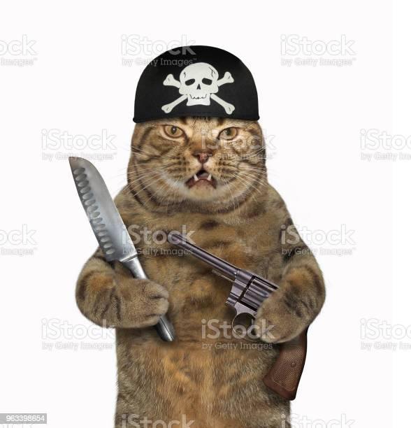 Kot Pirat Z Pistoletem I Nożem - zdjęcia stockowe i więcej obrazów Humor