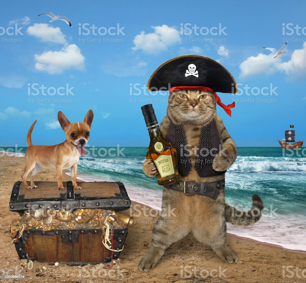 Cat pirate with his dog near the treasures stock photo