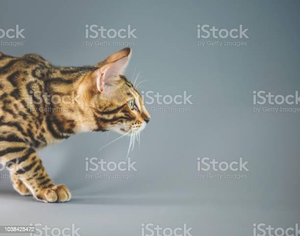 Cat play picture id1038425472?b=1&k=6&m=1038425472&s=612x612&h=er lwhmssh ofb2yntb5wa4f7ur3zzioaee8v2z16di=