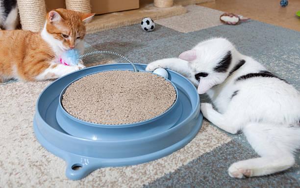 Cat play station picture id467706592?b=1&k=6&m=467706592&s=612x612&w=0&h=kevv l6xrxphsilogxnbnttr8sgtruidiguuauammuo=